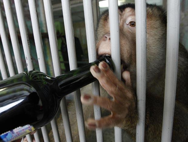 Macaco toma vinho em zoológico de Krasnoyarsk. (Foto: Ilya Naymushin/Reuters)