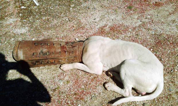 Cão foi encontrado com a cabeça presa em um cano. (Foto: AP)