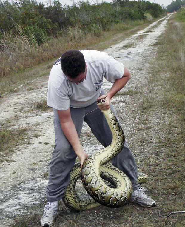 python (Foto: South Florida Water Management District/ AP)