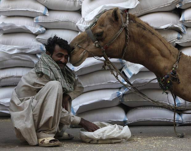 Um camelo foi flagrado fazendo carinho em um operário nesta quarta-feira (9)  em um mercado em Karachi, no Paquistão. (Foto: Akhtar Soomro/Reuters)