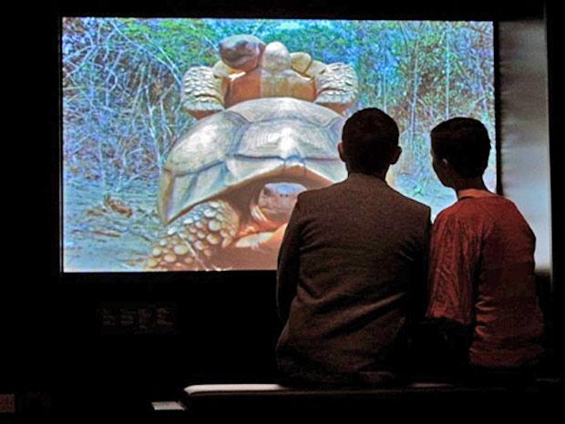 tartaruga exposição Reino Unido animais (Foto: Carls de Souza/ AFP)