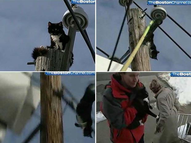 Gato saltou do poste, mas não ficou ferido. (Foto: Reprodução)