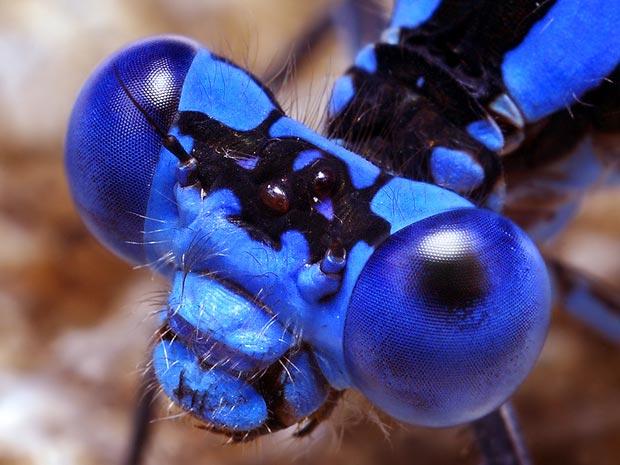 Aranhas moscas 1 (Foto: Thomas Shahan / www.thomasshahan.com)