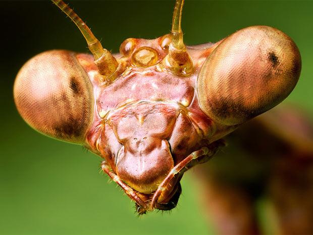 Aranhas moscas 6 (Foto: Thomas Shahan / www.thomasshahan.com)
