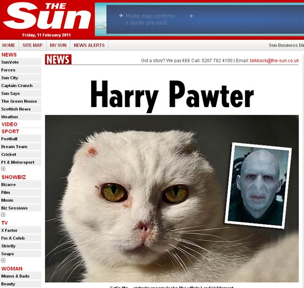 Gato não consegue família por causa de semelhança com 'Lord Voldemort'. (Foto: Reprodução)