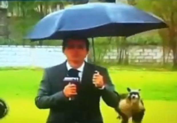 Nico Hueto teve que parar a apresentação de uma notícia no Peru. (Foto: Reprodução)