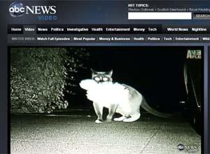 O gato Dusty, em imagem da emissora norte-americana ABC (Foto: Reprodução)