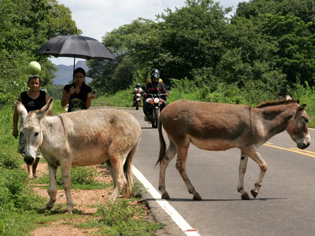 Perigo na BR 135, na Bahia. (Foto: Hugo Harada/Gazeta do Povo)