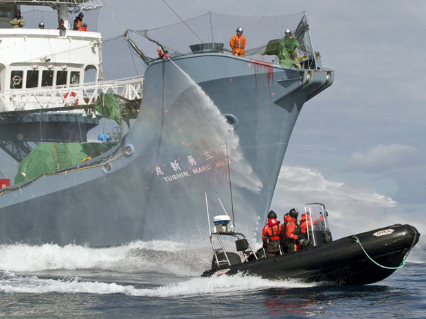 navio baleia (Foto: Sea Shepherd/ Reuters)