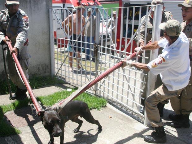 Pit bull ataca a própria dona no Rio (Foto: Jadson Marques/ AE)