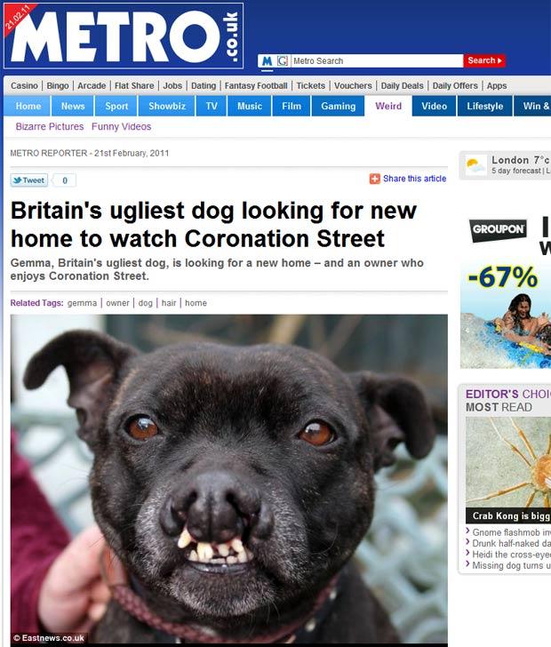 'Gemma' não consegue um novo lar por causa de sua aparência. (Foto: Reprodução/Metro)