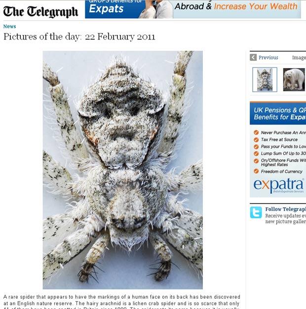 Aranha apresentava marcas nas costas que lembravam um rosto humano. (Foto: Reprodução/Daily Telegraph)