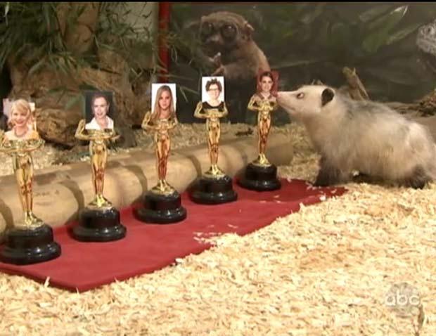 Gambá vesga aposta na vitória de Natalie Portman como melhor atriz no Oscar. (Foto: Reprodução/ABC)