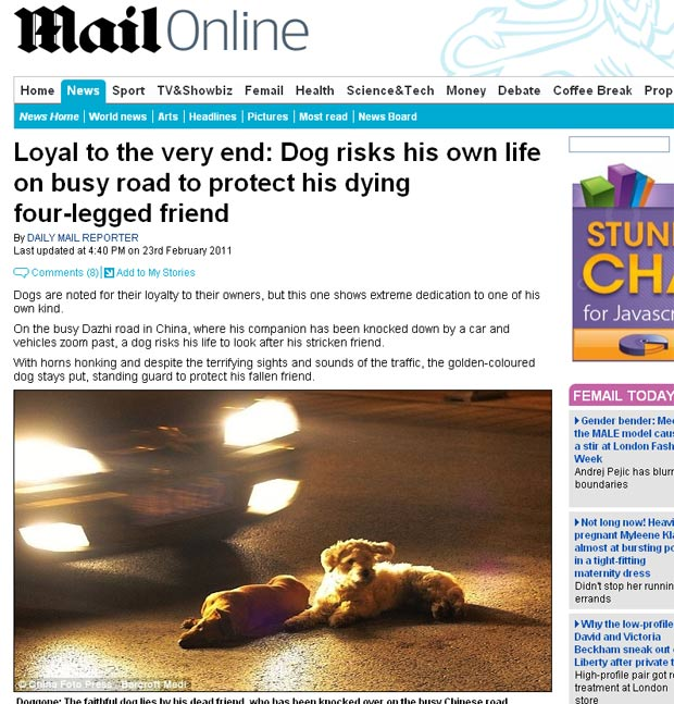 Cão arriscou sua vida para ficar ao lado de um outro cachorro que foi atropelado. (Foto: Reprodução/Daily Mail)