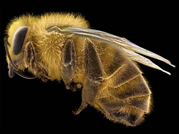 Beleza ciência 10 (Foto: David McCarthy e Annie Cavanagh / Wellcome Images)