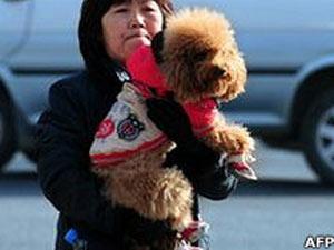 Estima-se que 80% dos cães de Xangai sejam irregulares (Foto: AFP)