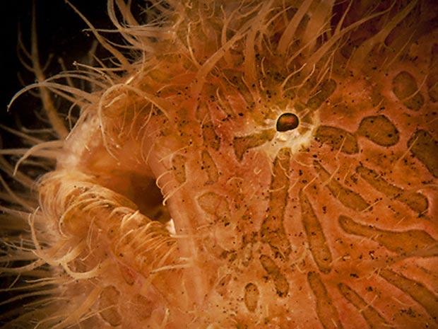 Escócia exposição marinha 1 (Foto: Daviel Selmeczi / via BBC)