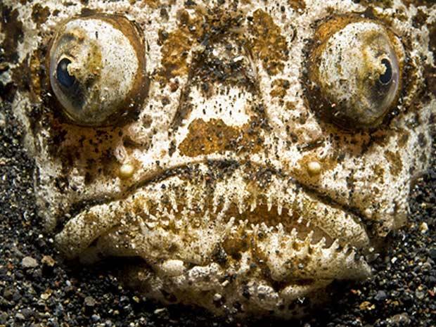 Escócia exposição marinha 10 (Foto: Daviel Selmeczi / via BBC)