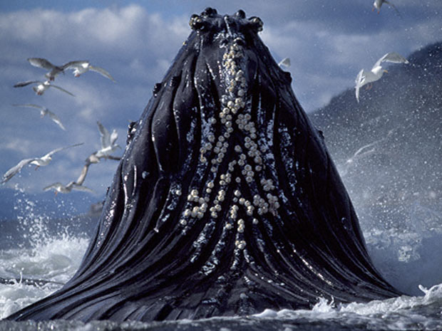 Escócia exposição marinha 2 (Foto: Tony Wu / via BBC)