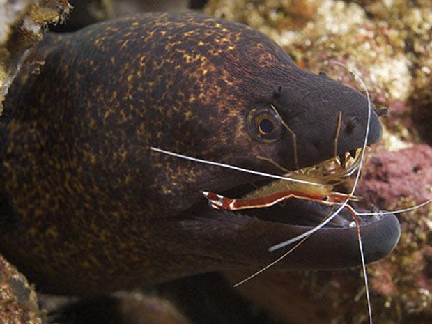 Escócia exposição marinha 3 (Foto: Tony Wu / via BBC)