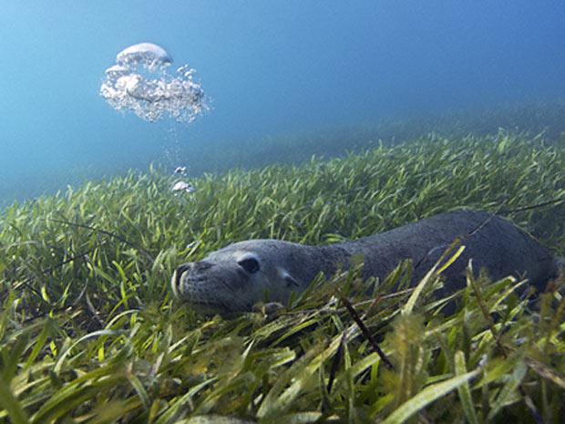 Escócia exposição marinha 4 (Foto: David Shale / via BBC)
