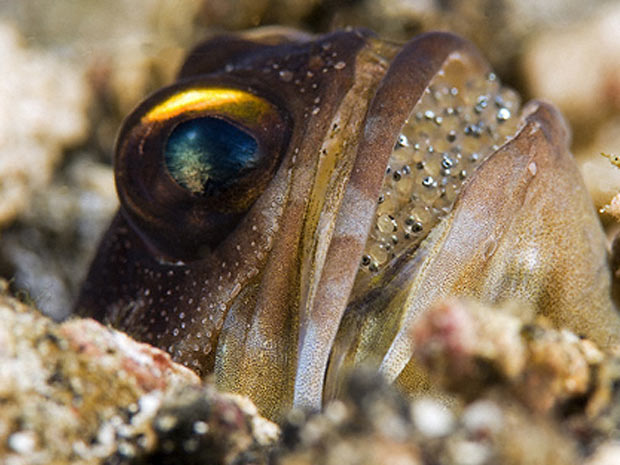 Escócia exposição marinha 9 (Foto: Daviel Selmeczi / via BBC)