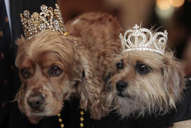 Um cão e uma cadela foram coroados 'rei' e 'rainha', nesta sexta-feira (25), do tradicional 'Desfile de Baco', que será realizado no domingo em Nova Orleans, nos EUA. (Foto: Gerald Herbert/AP)