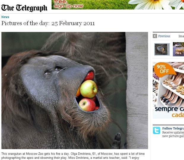 Orangotango Foi Flagrado A Boca Cheia De Frutas Foto