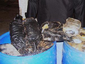 Maconha estava escondida em tonéis, com fezes de cachorro para disfarçar o cheiro da droga (Foto: Divulgação/PF-PE)