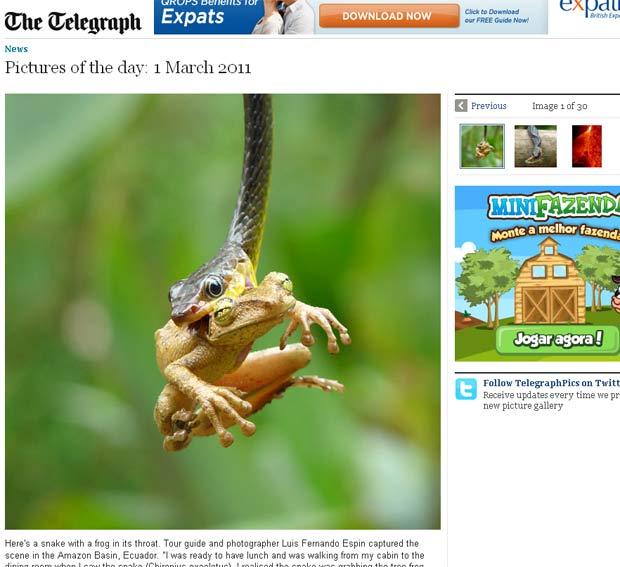 Réptil levou mais de 45min para devorar a presa. (Foto: Reprodução/Daily Telegraph)