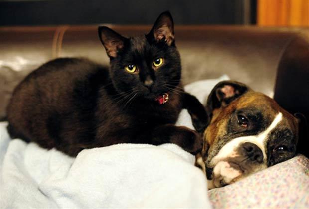 O gato chamado 'Balthazar', de um ano de idade, e a cadela 'Roxana', de seis anos, descansam juntos na quarta-feira (2) em uma casa em Liptovsky Mikulás, na Eslováquia. (Foto: Joe Klamar/AFP)