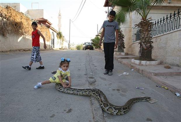 Menina brinca com cobra de estimação em rua em Ramallah, na Cisjordânia. (Foto: Abbas Momani/AFP)