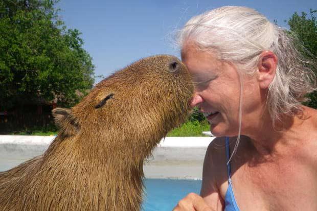 A americana Melanie Typaldos, de 55 anos, ficou conhecida no estado Texas, nos EUA, por manter uma capivara como animal de estimação. A mulher vive com o grande roedor em sua casa em Buda. (Foto: Barcroft/Getty Images)