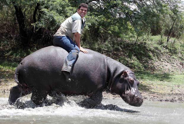Marius Els mantém um hipopótamo como animal de estimação em sua fazenda em Free State, na África do Sul. Els chega a montar o animal de mais de uma tonelada chamado 'Humphrey'.  (Foto: Matthew Tabaccos/Barcroft Medi/Getty Images)