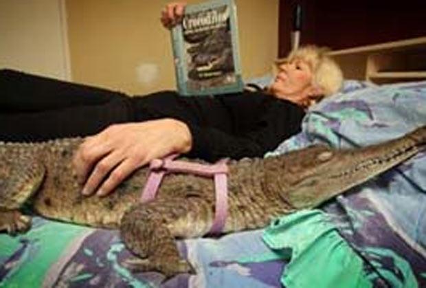 ma família australiana tem como animal de estimação uma fêmea de crocodilo. A proprietária do animal, Vicki Lowing, disse que seu filho Andrew, de 15 anos, e a crocodilo Johnie, de 13 anos, cresceram praticamente juntos. (Foto: Reprodução)