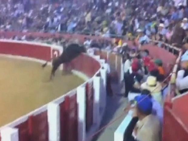 Touro salta a cerca em arena na cidade venezuelana de Mérida (Foto: BBC)