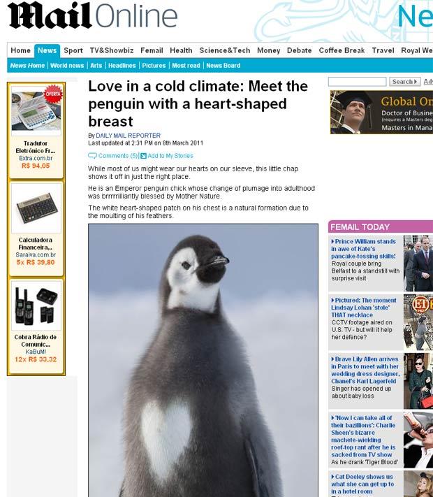 Pinguim com mancha em formato de coração. (Foto: Reprodução/Daily Mail)