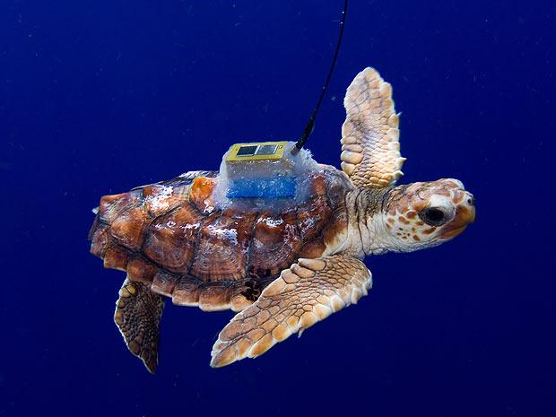 tartaruga (Foto: James Abernethy/Barcroft Media/Getty Images)