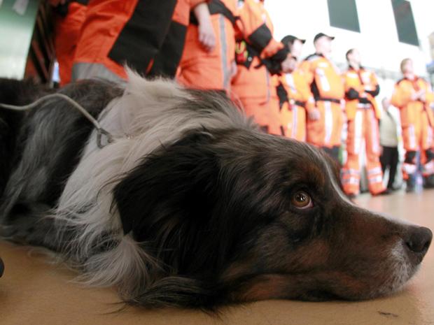 Cão de equipe suíça descansa durante briefing em base de Kloten, neste sábado (12), antes de partir para ajudar no resgate de vítimas do terremoto e do tsunami no Japão. (Foto: AFP)