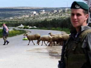 Pastor palestino anda com suas ovelhas atrás de um soldado israelense na Cisjordânia, neste domingo (13) (Foto: AFP/Jaafar Ashtiyeh)