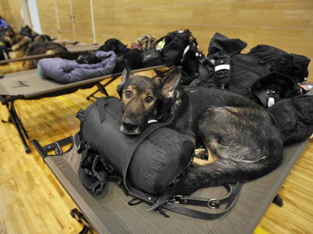 Cães descansam no abrigo-escola de Setamai school em Sumita (Foto: Matt Dunham/AP)