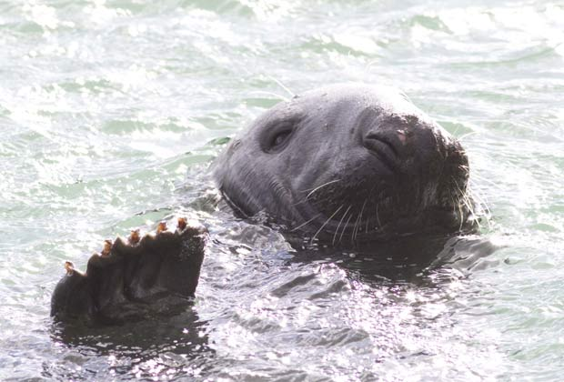Cena curiosa ocorreu em Howth, na Irlanda. (Foto: Paul Hughes/Barcroft Media/Getty Images)