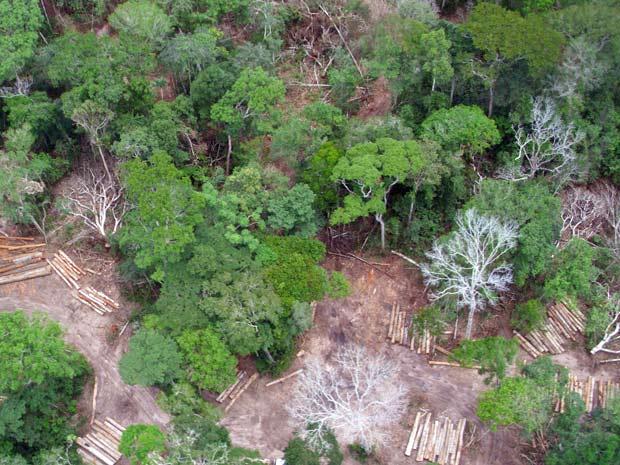 madeira (Foto: Ibama RO/ Divulgação)
