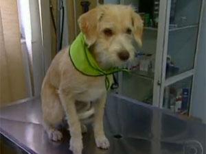 Cão parecido com 'Pinpoo' é adotado (Foto: Reprodução/TV Globo)