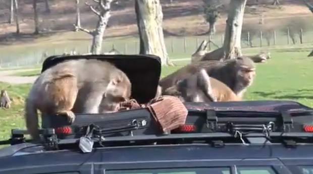 Animais aquearam objetos que estavam em malas. (Foto: Reprodução)