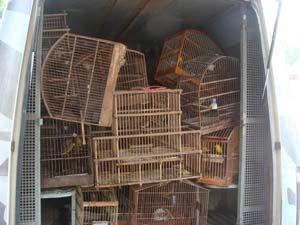 Aves silvestres apreendidas na Baixada Fluminense (Foto: Divulgação/Batalhão Florestal do Rio de Janeiro)