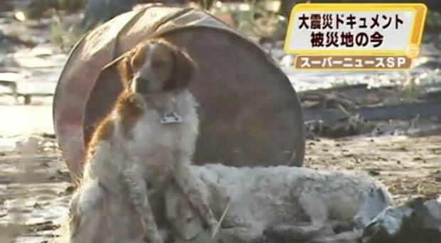 Cão ficou protegendo parceiro ferido.  (Foto: Reprodução)