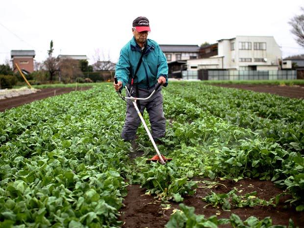 Fazendeiro colhe espinafre em plantação na província de Ibaraki, no Japão, nesta terça (22) (Foto: AP)