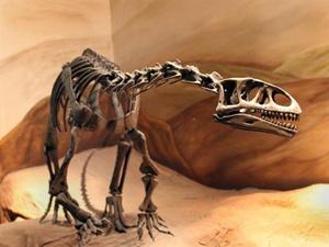 Dinossauro tinha cerca de três metros (Foto: AFP)