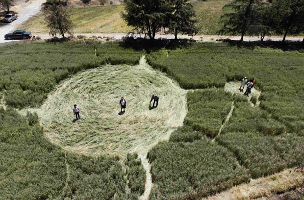 Círculos foram encontrados em dois campos diferentes. (Foto: Henry Romero/Reuters)